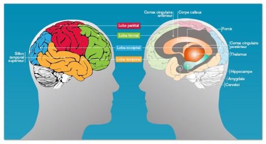 Memoire du cerveau