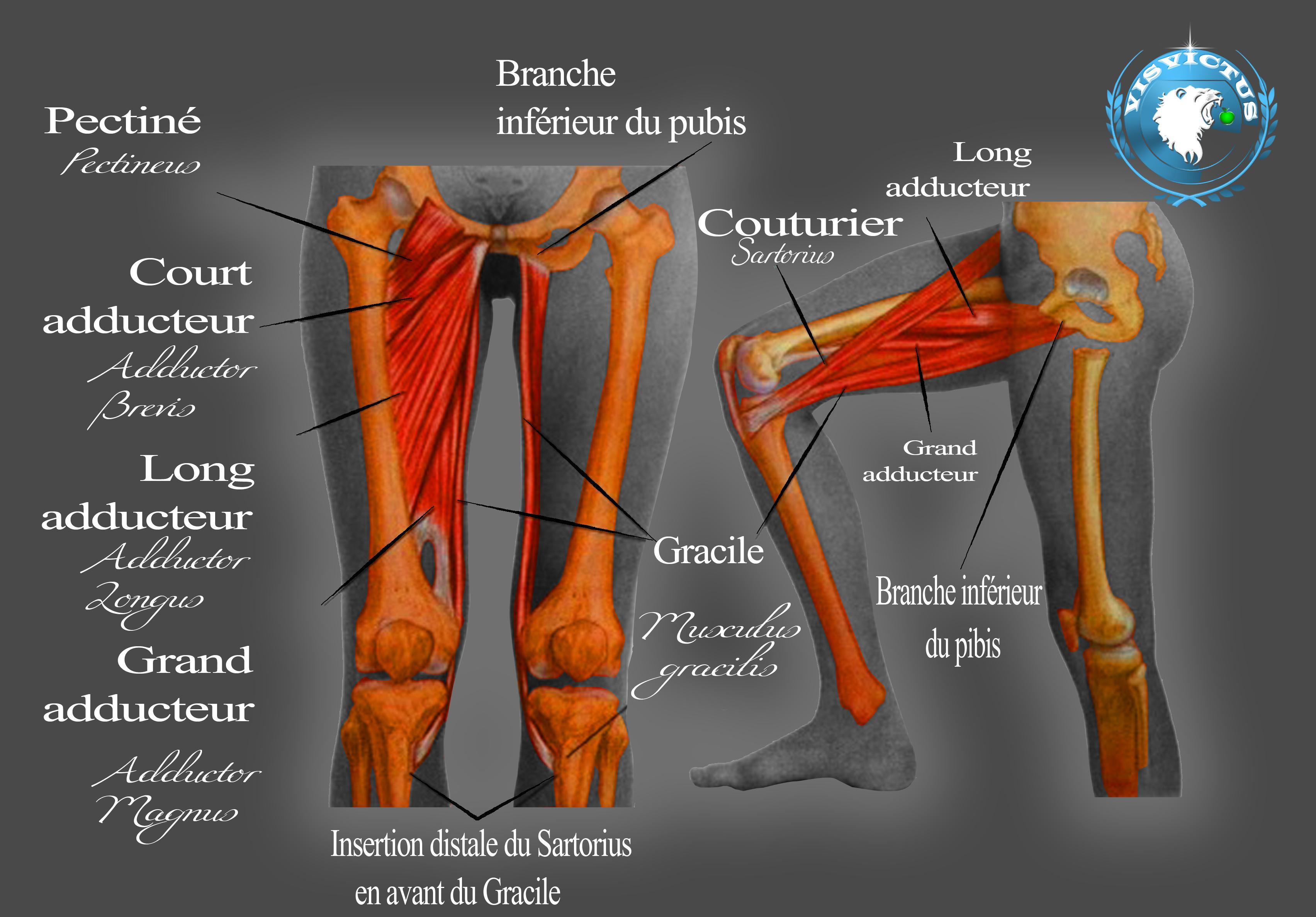 La Mobilité du bassin et de la hanche « WRIGHT BALANCE – «The Swing ...