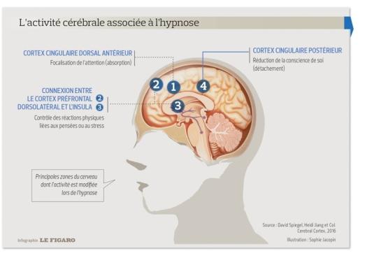 l'activité du cerveau