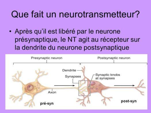 neurotransmetteur-1