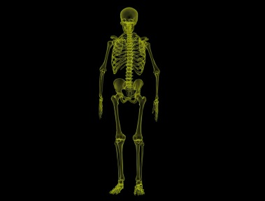 human-anatomie squelette
